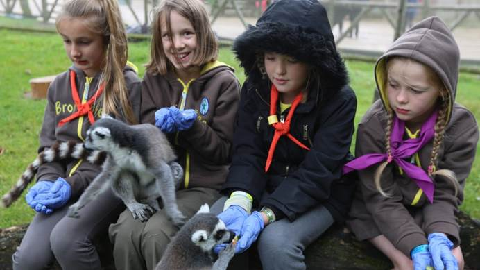 Brownies with lemurs eating out of their hands