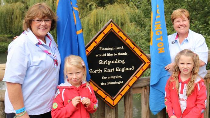 Rainbows and Guide leaders unveiling a plaque thanking Girlguiding for adopting flamingos at Flamingo Land